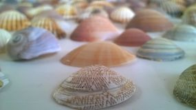 Shells op de lijst royalty-vrije stock afbeelding