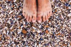 Shells op de overzeese kust close-up Royalty-vrije Stock Fotografie