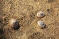 Shells op de rots Royalty-vrije Stock Afbeeldingen