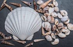 Shells op de steen Royalty-vrije Stock Afbeelding