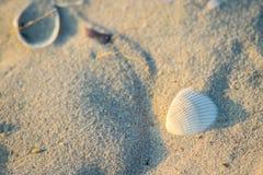 Shells op de zandige kust royalty-vrije stock fotografie