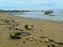 Shells op de zandkust stock foto's