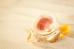 Shells op een golvend zand Stock Afbeeldingen