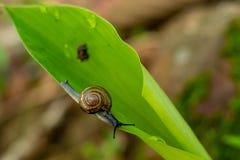 Shells op een groen blad royalty-vrije stock fotografie