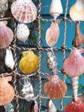 Shells op een Koord stock fotografie
