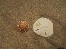 Shells op een leeg strand stock foto