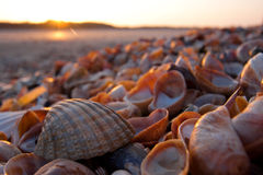Shells op een strand Royalty-vrije Stock Afbeeldingen