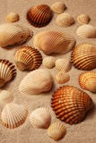 Shells op een strand stock afbeeldingen