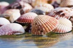 Shells op glas royalty-vrije stock fotografie