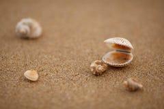 Shells op het overzeese zand Stock Afbeeldingen