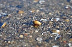 Shells op het rivierwater royalty-vrije stock afbeeldingen