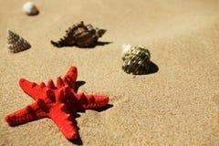 Shells op het strand Stock Fotografie