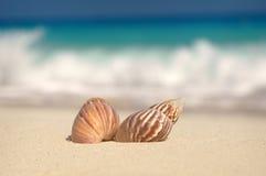 shells op het strand Stock Afbeeldingen