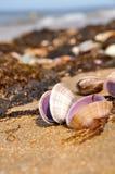 Shells op het strand Stock Foto's