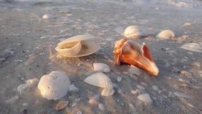 Shells op het strand royalty-vrije stock afbeeldingen