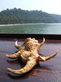 Shells op het strand Royalty-vrije Stock Fotografie