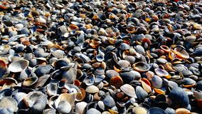 Shells op het strand in de Zwarte Zee stock afbeeldingen