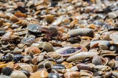 Shells op het strand in het zand, Stock Fotografie