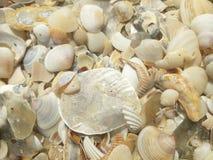 Shells op het strand stock foto