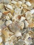 Shells op het strand royalty-vrije stock foto