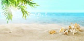 Shells op het strand Tropische Overzees royalty-vrije stock afbeeldingen