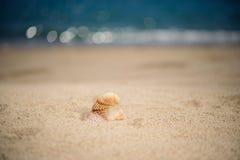 Shells op het strand, zomer Stock Afbeelding