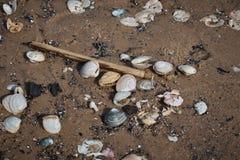 Shells op het Zand stock foto's