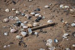 Shells op het Zand royalty-vrije stock fotografie