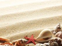 Shells op het zand Stock Foto