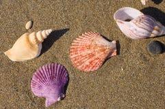 Shells op het zand Royalty-vrije Stock Afbeelding