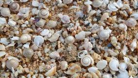 Shells op het zand, aardachtergrond stock foto