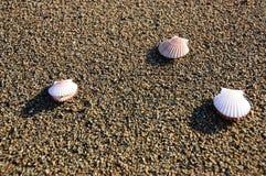 Shells op het zand over het overzees Stock Foto