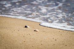 Shells op het zandstrand en de zachte golf van het overzees Stock Afbeelding
