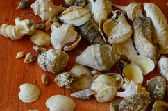 Shells op houten achtergrond Stock Foto