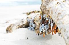 Shells op stam Royalty-vrije Stock Afbeeldingen
