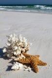 Shells op Strand Stock Foto's