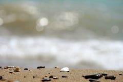 Shells op Strand Stock Afbeeldingen