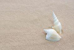Shells op strand Stock Afbeelding