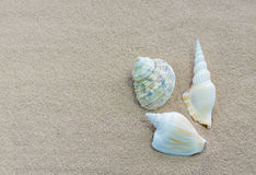 Shells op strand Stock Fotografie