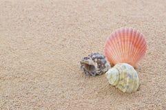 Shells op strand Royalty-vrije Stock Foto
