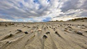 Shells op wind geveegd strand royalty-vrije stock foto