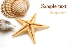 Shells op wit Royalty-vrije Stock Foto