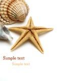 Shells op wit Royalty-vrije Stock Afbeeldingen