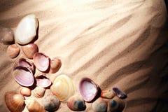 Shells op zand Royalty-vrije Stock Fotografie