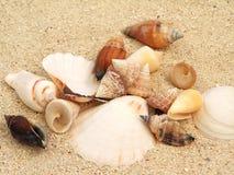 Shells op Zand stock afbeelding