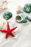 Shells op zand Stock Fotografie