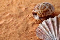 Shells op zand met exemplaarruimte royalty-vrije stock afbeelding