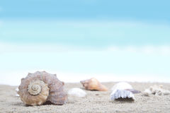 Shells op zandig strand Stock Foto's
