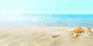 Shells op zandig strand De zomer royalty-vrije stock foto's