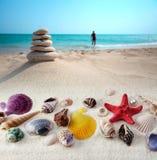 Shells op zandstrand stock afbeelding